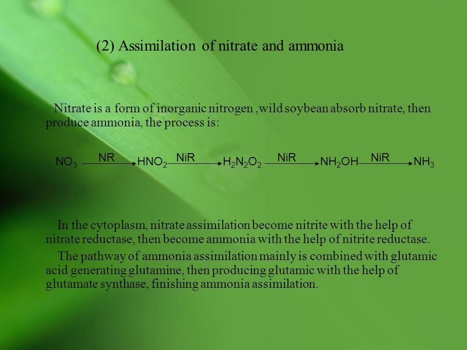 (2) Assimilation of nitrate and ammonia