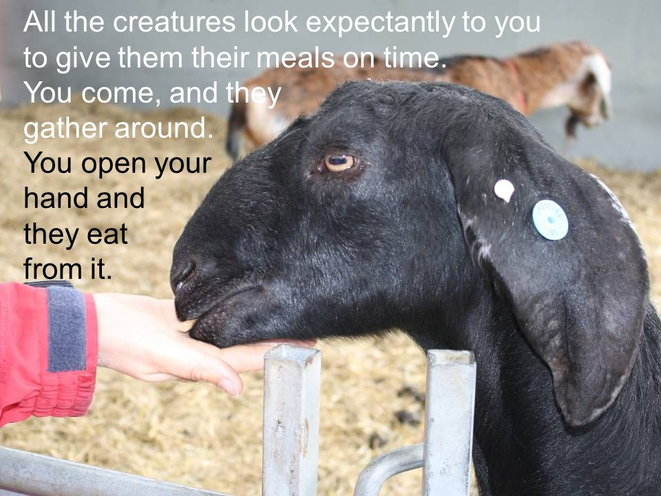 All the creatures look expectantly to you to give them their meals on time. You come, and they