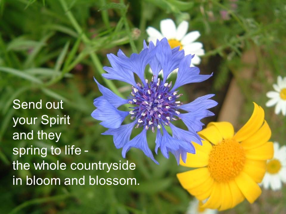 Send out your Spirit and they spring to life - the whole countryside in bloom and blossom.