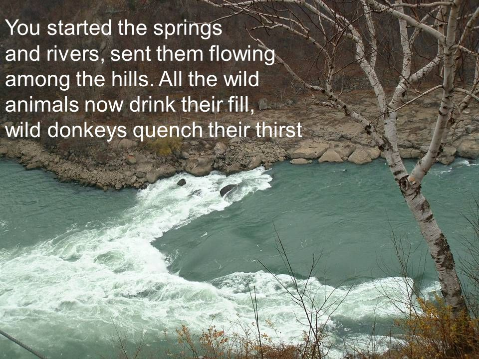 You started the springs