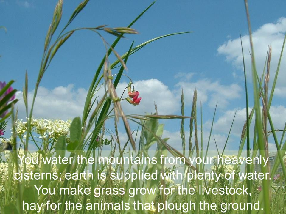 You make grass grow for the livestock,
