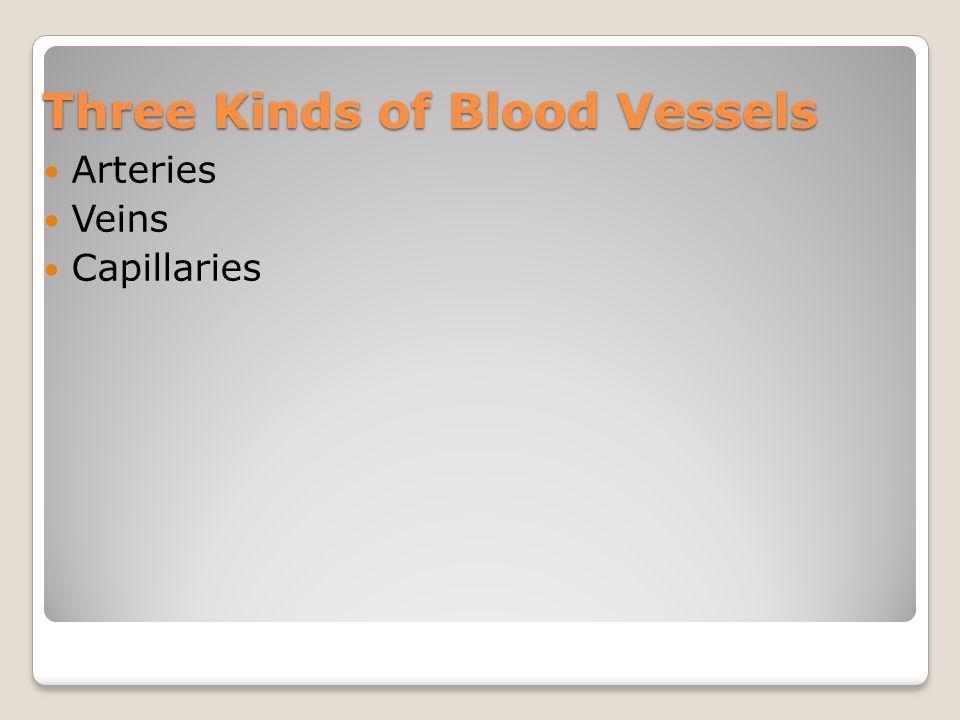 Three Kinds of Blood Vessels