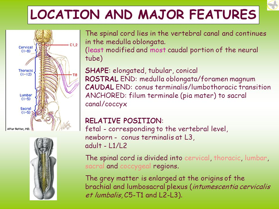 LOCATION AND MAJOR FEATURES