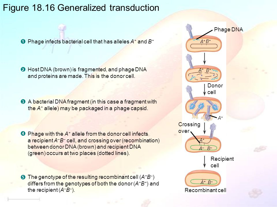 Figure 18.16 Generalized transduction