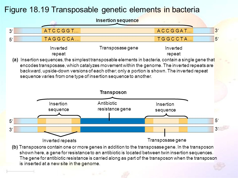 Figure 18.19 Transposable genetic elements in bacteria