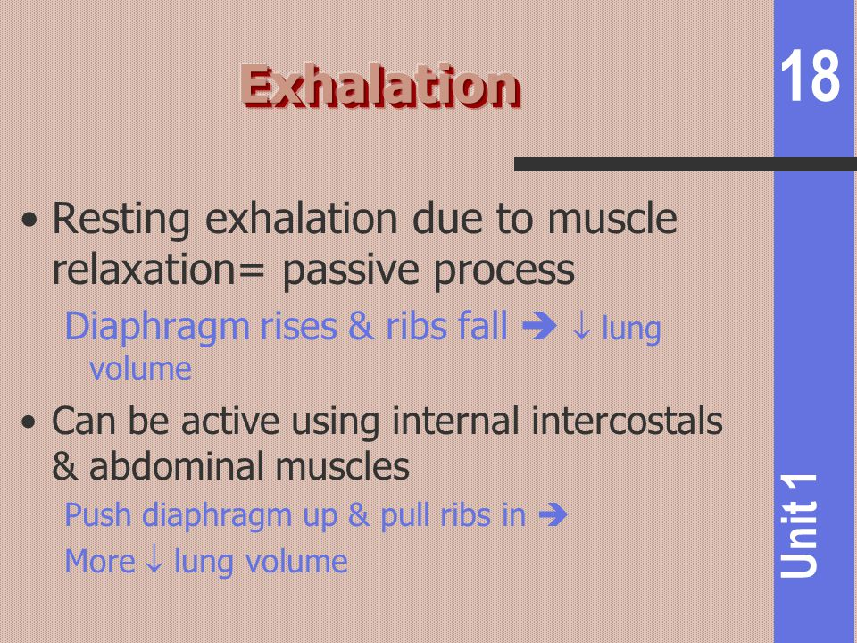 Exhalation Resting exhalation due to muscle relaxation= passive process. Diaphragm rises & ribs fall   lung volume.