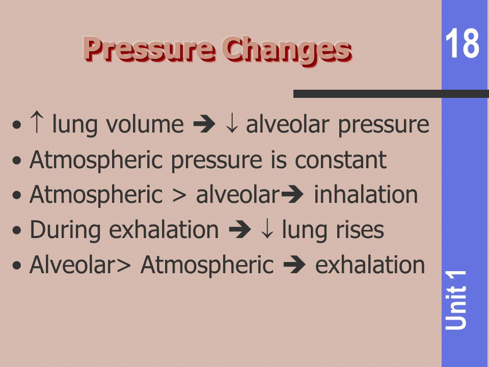 Pressure Changes  lung volume   alveolar pressure