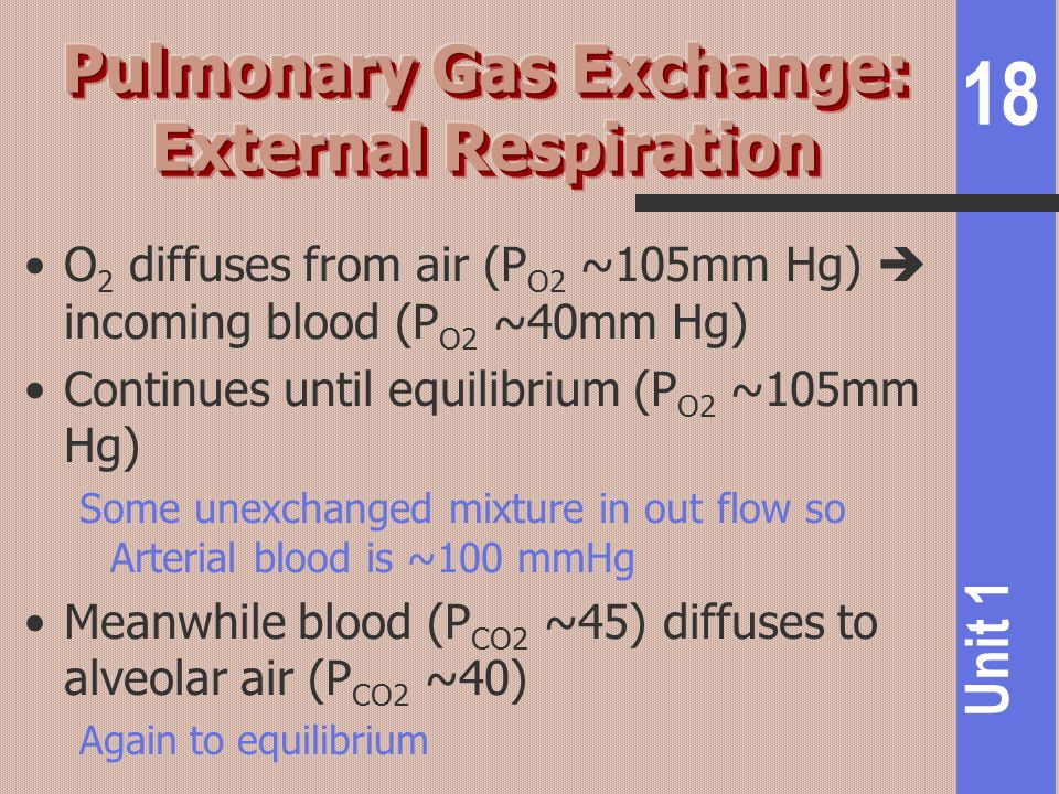 Pulmonary Gas Exchange: External Respiration