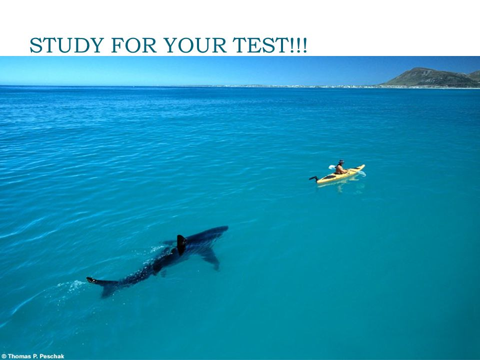 STUDY FOR YOUR TEST!!!