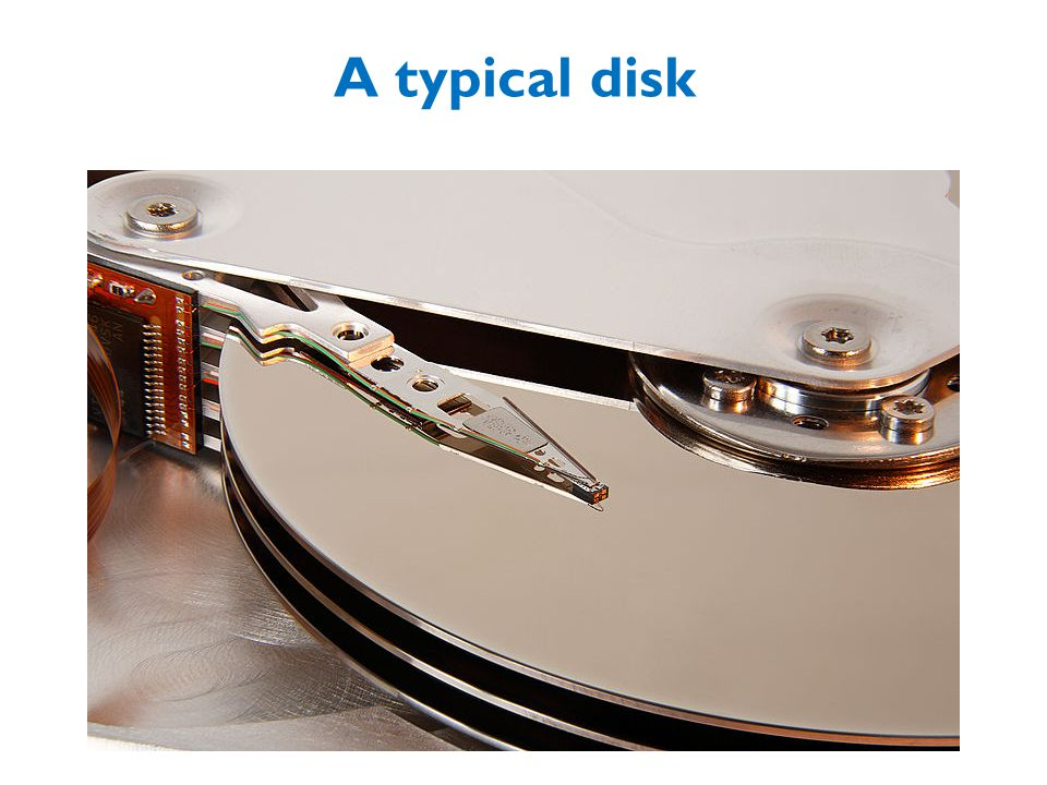 A typical disk 16 – me vs chihuhua – or vs midsize car