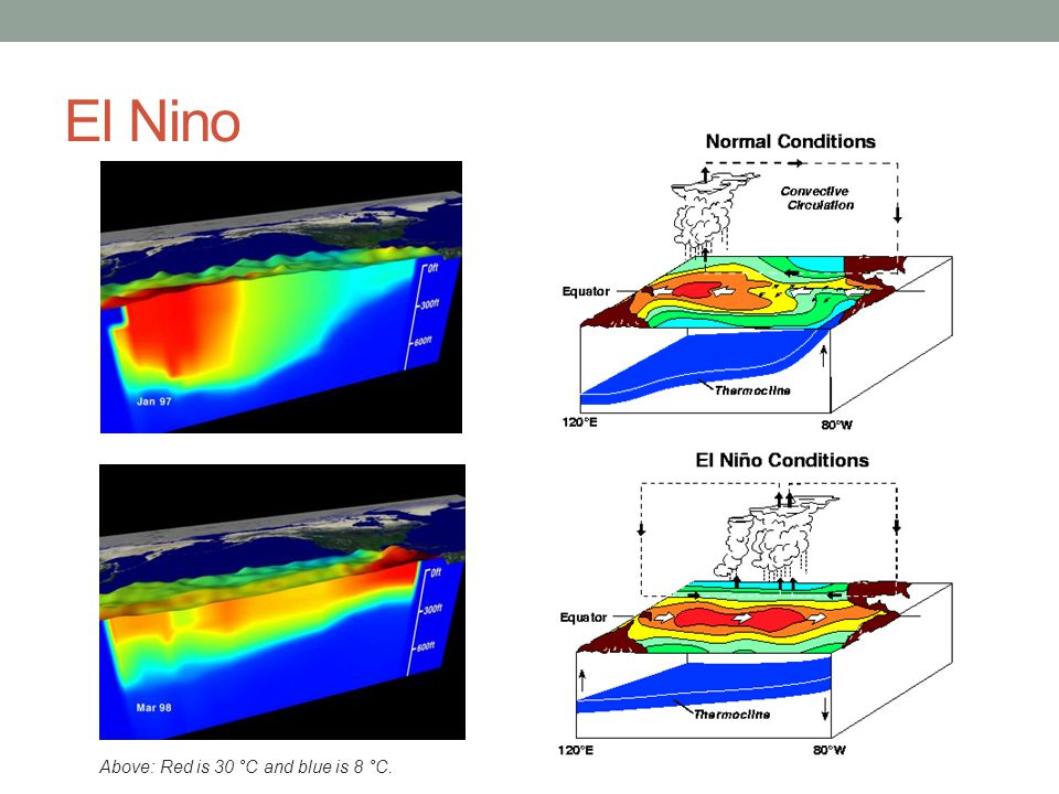 El Nino Above: Red is 30 °C and blue is 8 °C.