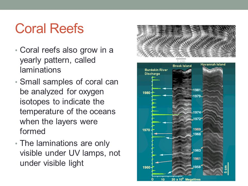 Coral Reefs Coral reefs also grow in a yearly pattern, called laminations.
