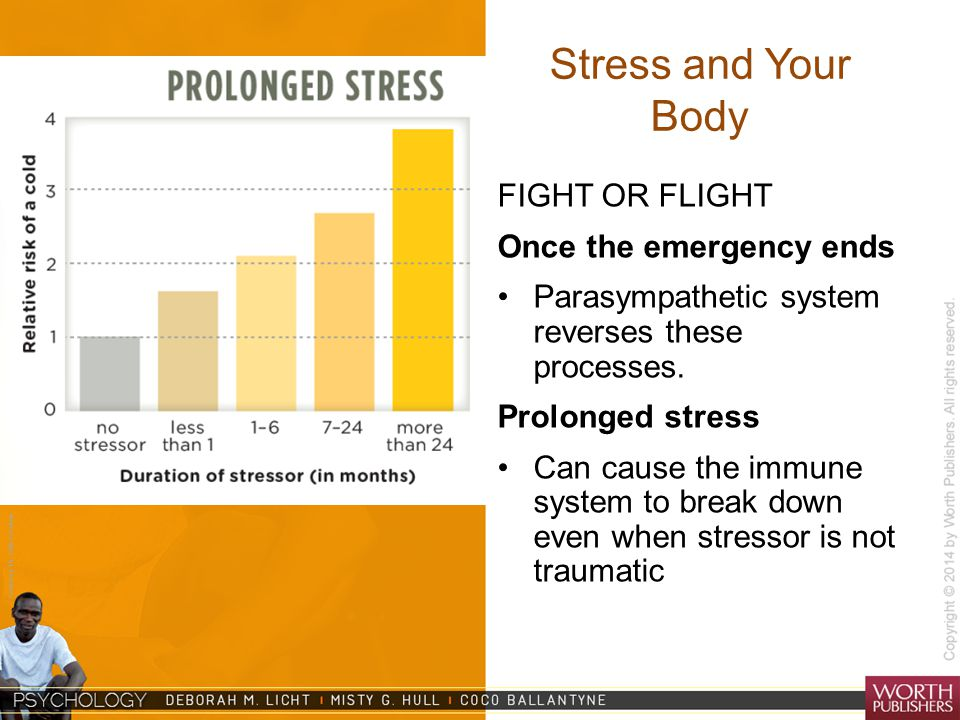 Stress and Your Body FIGHT OR FLIGHT Once the emergency ends