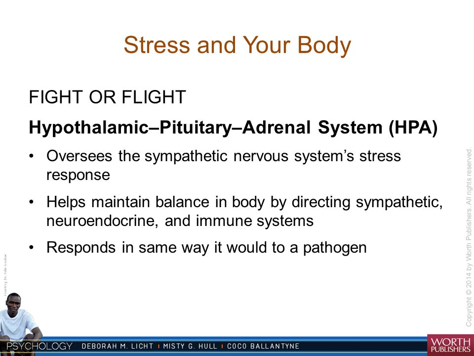 Stress and Your Body FIGHT OR FLIGHT