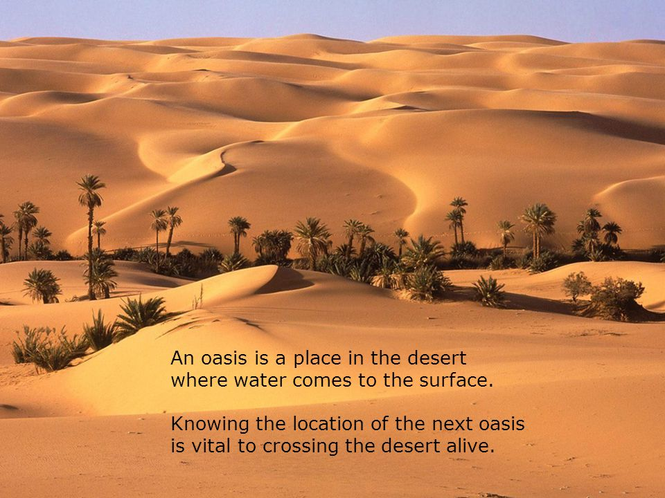 An oasis is a place in the desert where water comes to the surface.