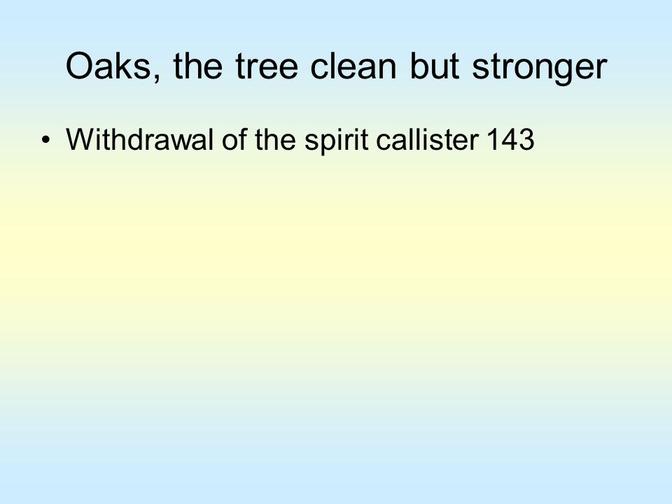Oaks, the tree clean but stronger