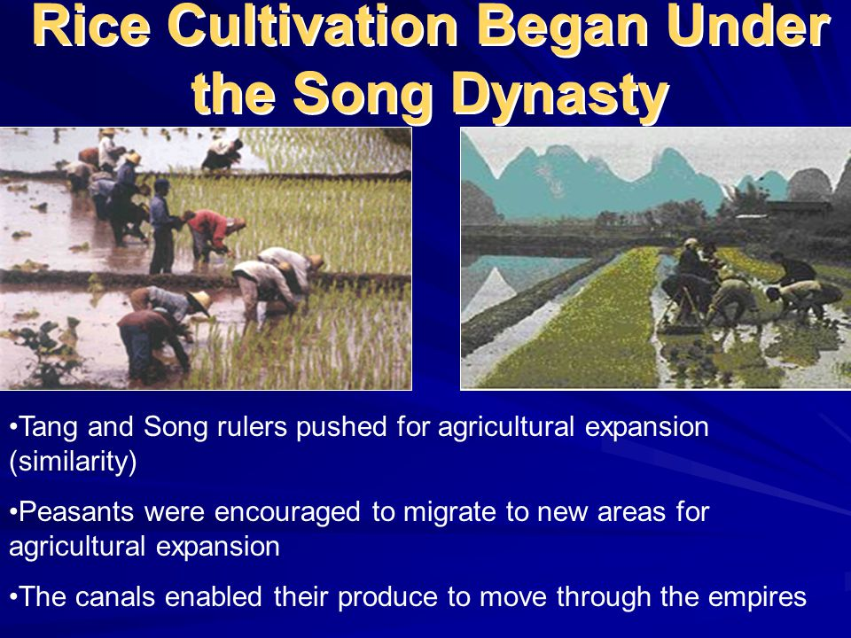 Rice Cultivation Began Under the Song Dynasty