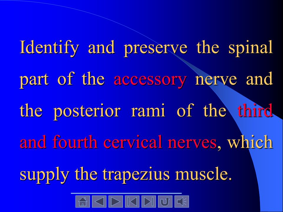 Identify and preserve the spinal part of the accessory nerve and the posterior rami of the third and fourth cervical nerves, which supply the trapezius muscle.