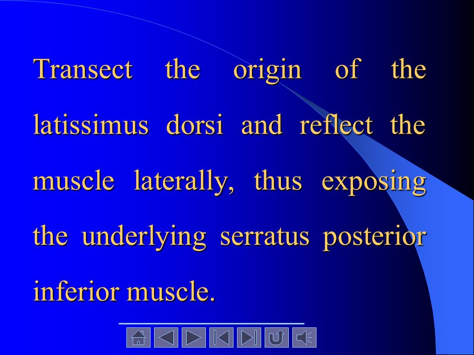 Transect the origin of the latissimus dorsi and reflect the muscle laterally, thus exposing the underlying serratus posterior inferior muscle.