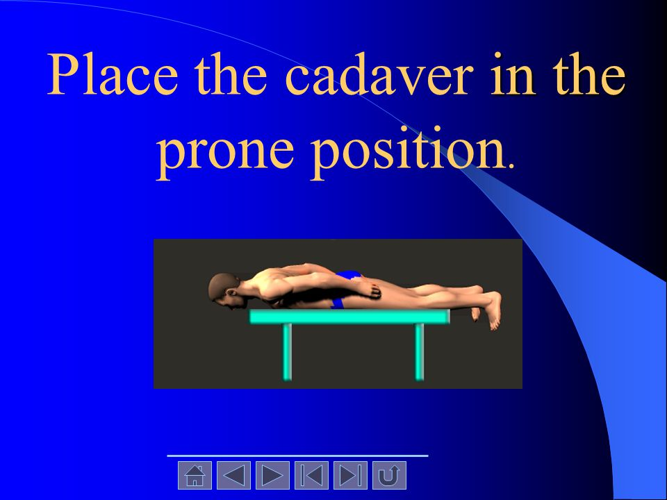 Place the cadaver in the prone position.