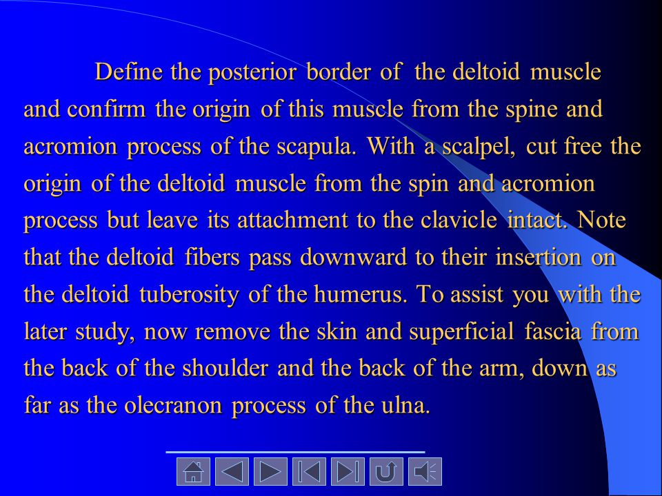 Define the posterior border of the deltoid muscle and confirm the origin of this muscle from the spine and acromion process of the scapula.
