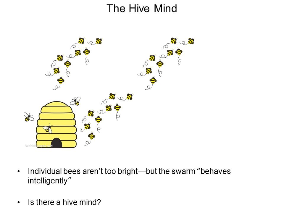 The Hive Mind Individual bees aren't too bright—but the swarm behaves intelligently Is there a hive mind