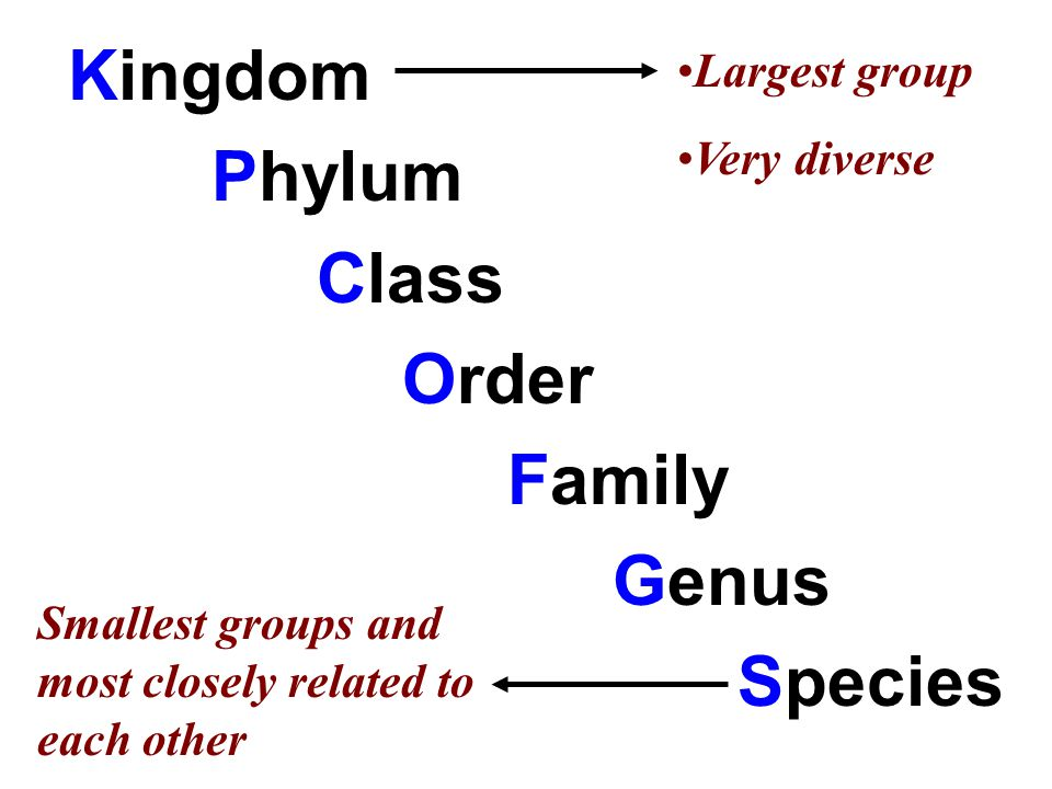 Phylum Class Order Family Genus Species Largest group Very diverse