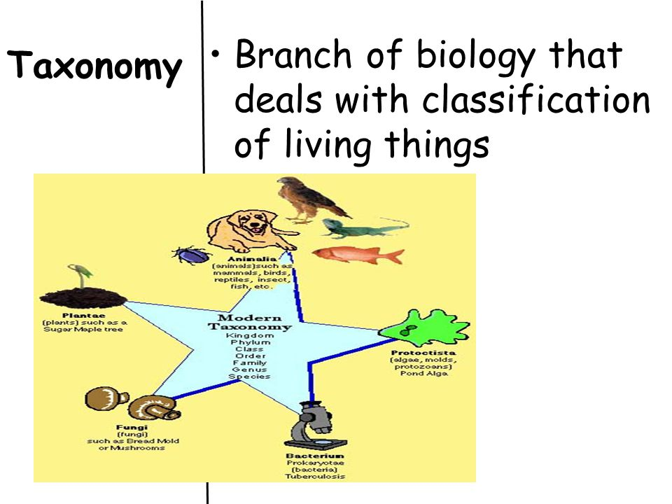 Branch of biology that deals with classification of living things