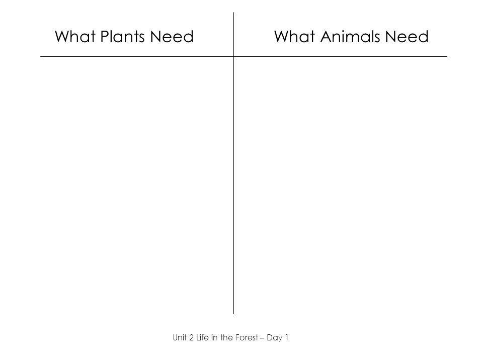 What Plants Need What Animals Need