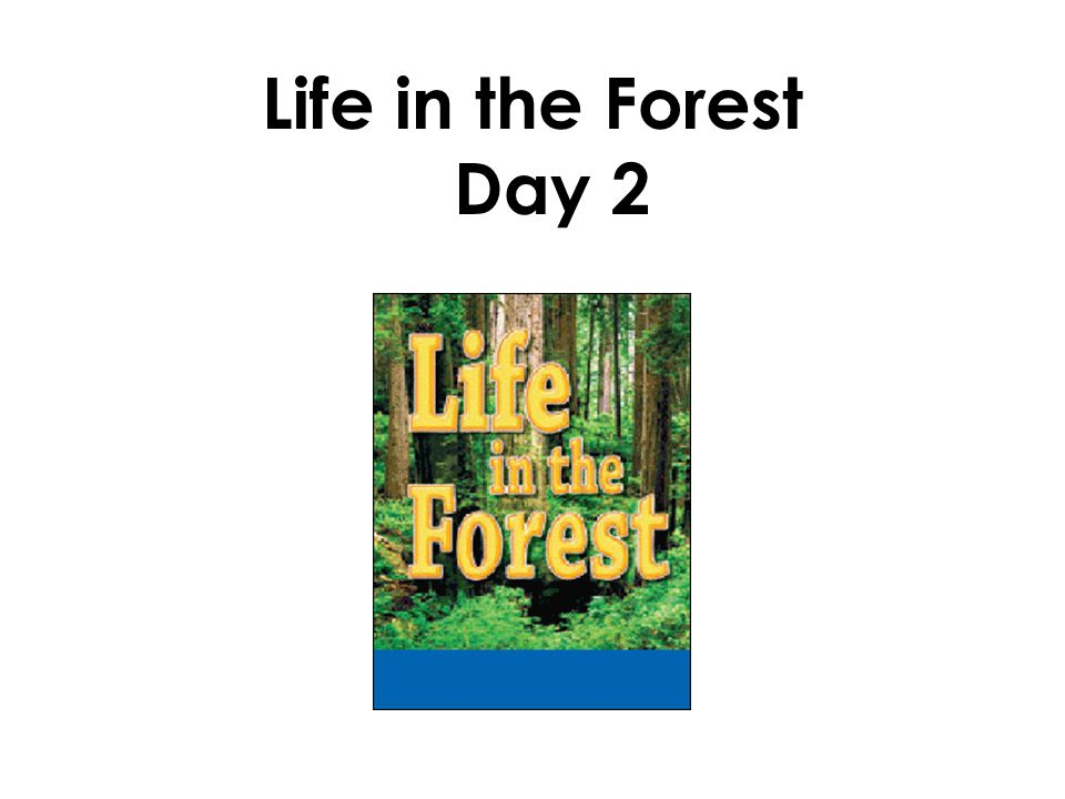 Life in the Forest Day 2