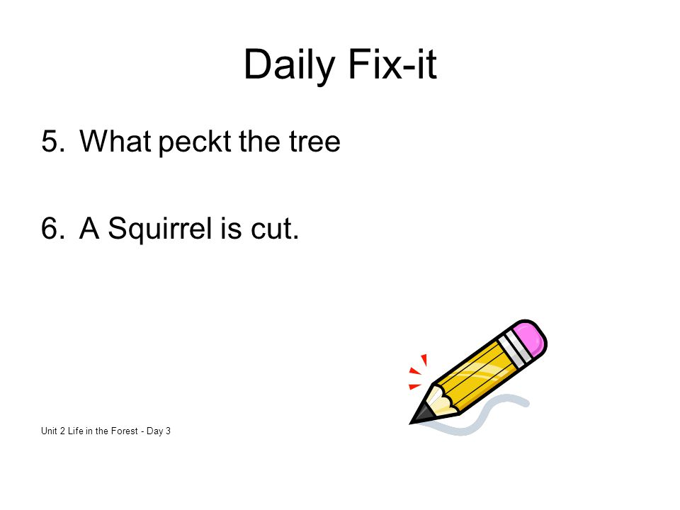 Daily Fix-it What peckt the tree A Squirrel is cut.