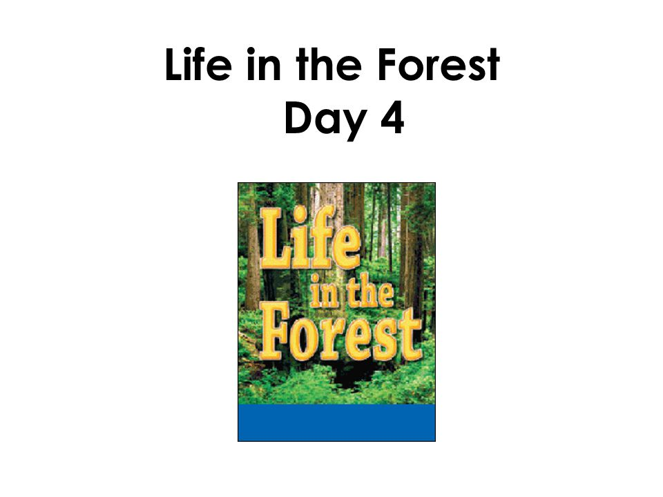 Life in the Forest Day 4