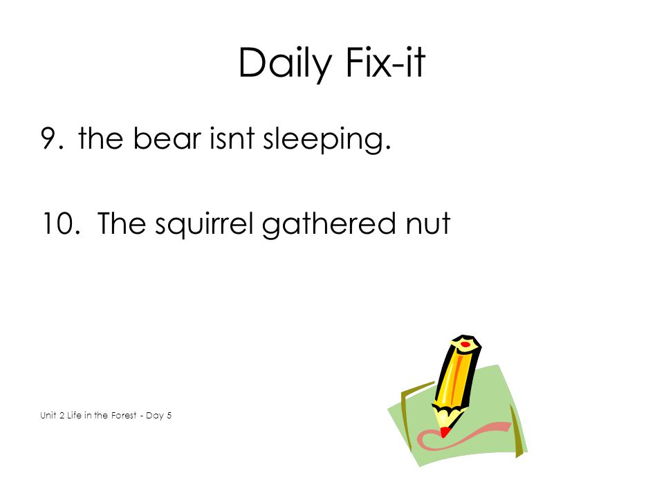 Daily Fix-it the bear isnt sleeping. The squirrel gathered nut