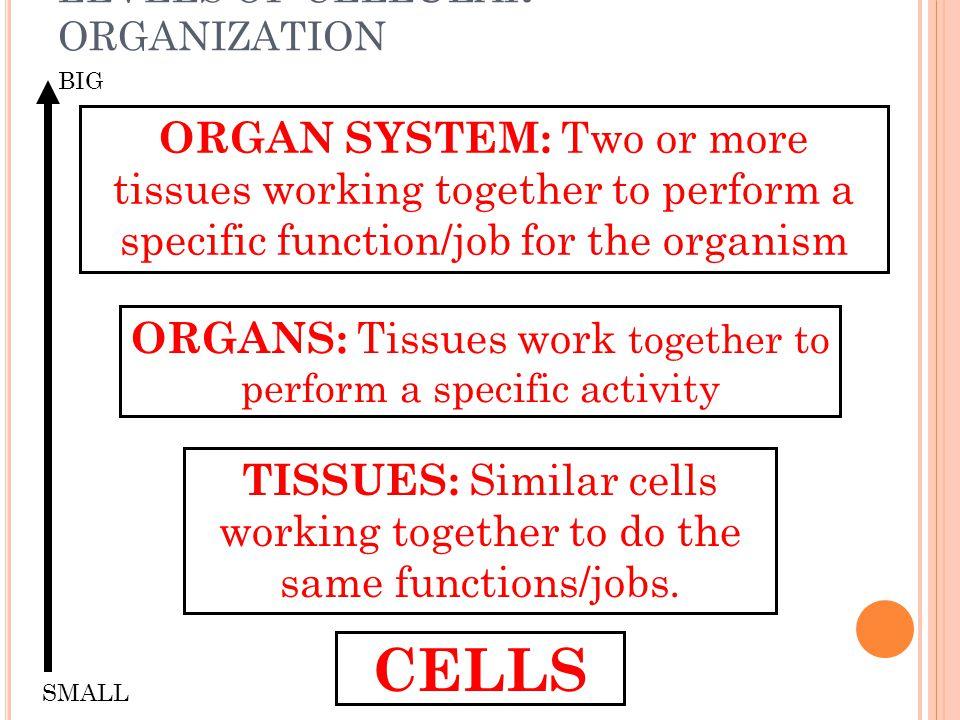 LEVELS OF CELLULAR ORGANIZATION