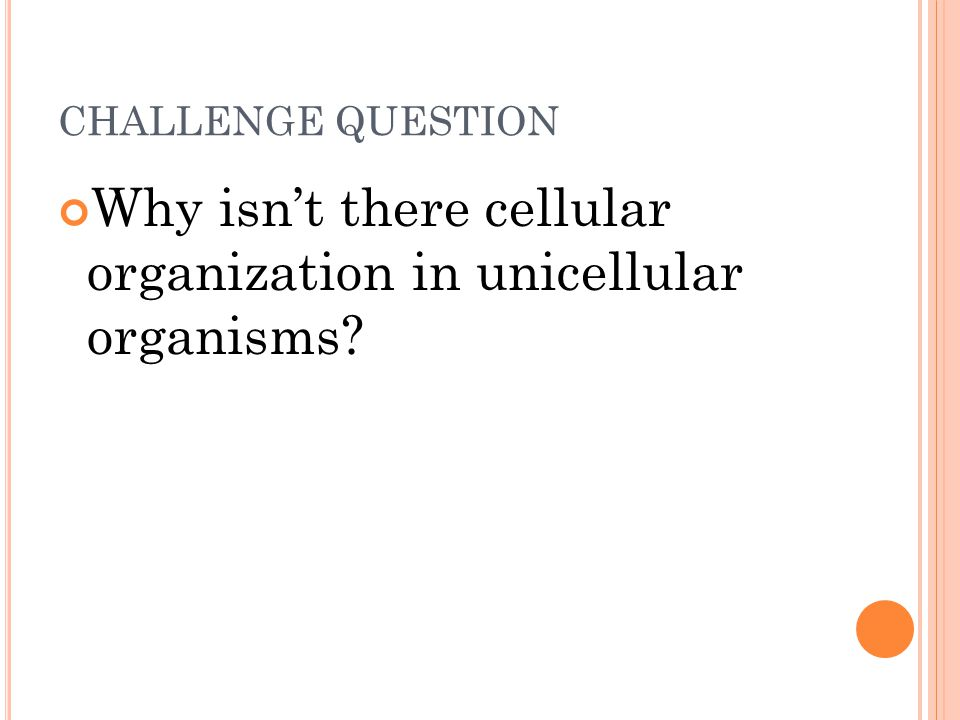 Why isn't there cellular organization in unicellular organisms