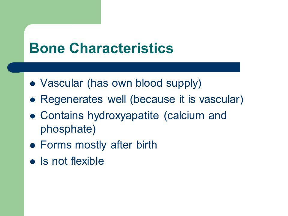 Bone Characteristics Vascular (has own blood supply)