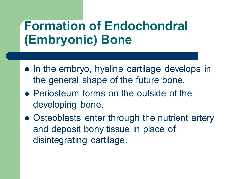 Formation of Endochondral (Embryonic) Bone