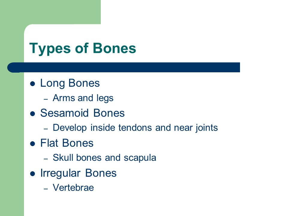 Types of Bones Long Bones Sesamoid Bones Flat Bones Irregular Bones