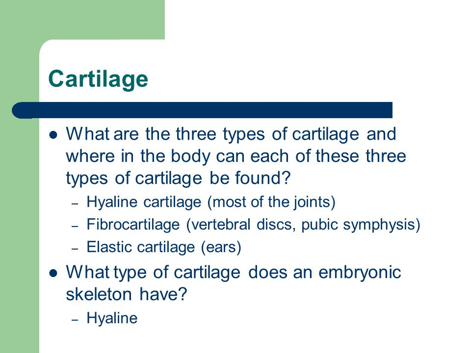 Cartilage What are the three types of cartilage and where in the body can each of these three types of cartilage be found