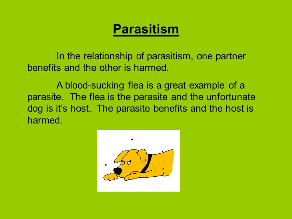Parasitism In the relationship of parasitism, one partner benefits and the other is harmed.