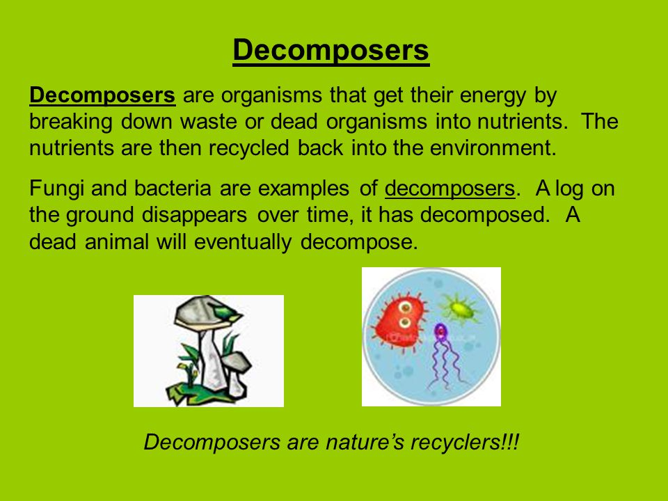 Decomposers are nature's recyclers!!!