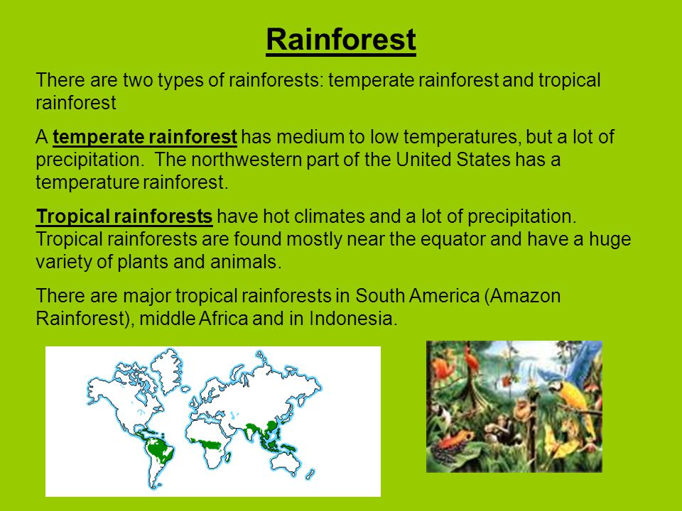 Rainforest There are two types of rainforests: temperate rainforest and tropical rainforest.