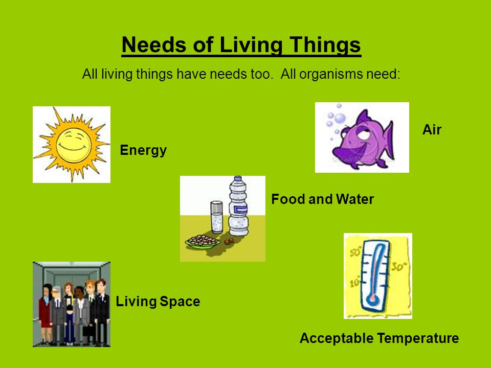 All living things have needs too. All organisms need: