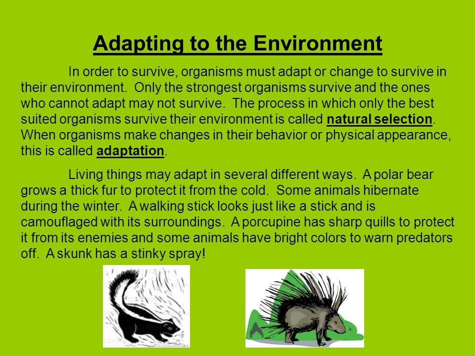 adapting business to the environment If a company is incapable of adaptation, they are unlikely to survive in today's rapidly changing business environment in which market forces can change monthly or.