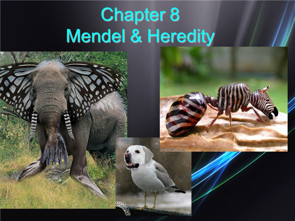 Chapter 8 Mendel & Heredity