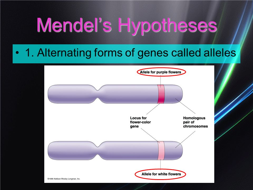 Mendel's Hypotheses 1. Alternating forms of genes called alleles