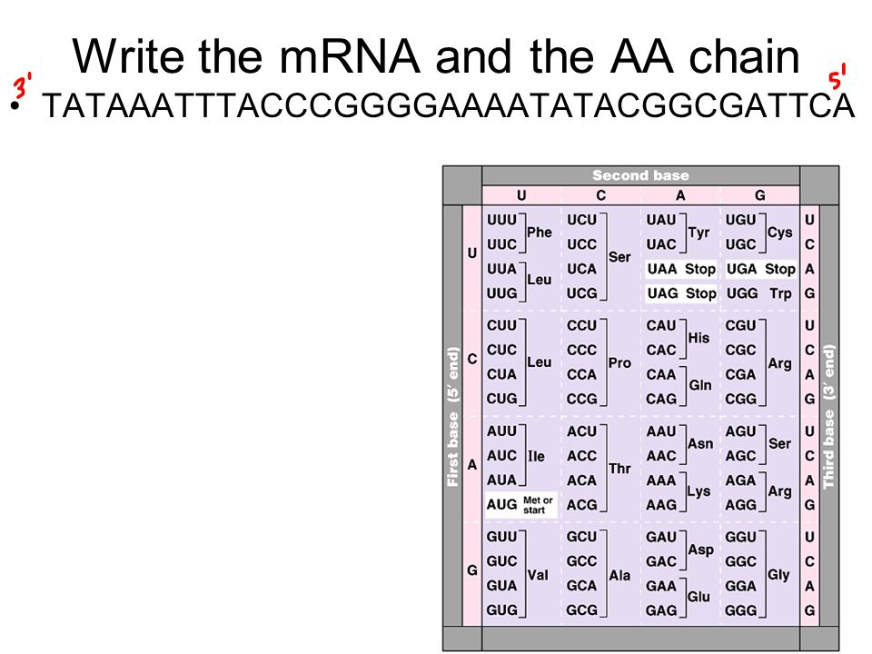 Write the mRNA and the AA chain