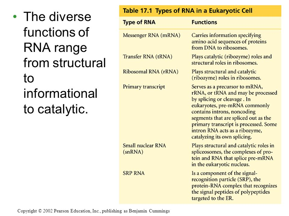 The diverse functions of RNA range from structural to informational to catalytic.