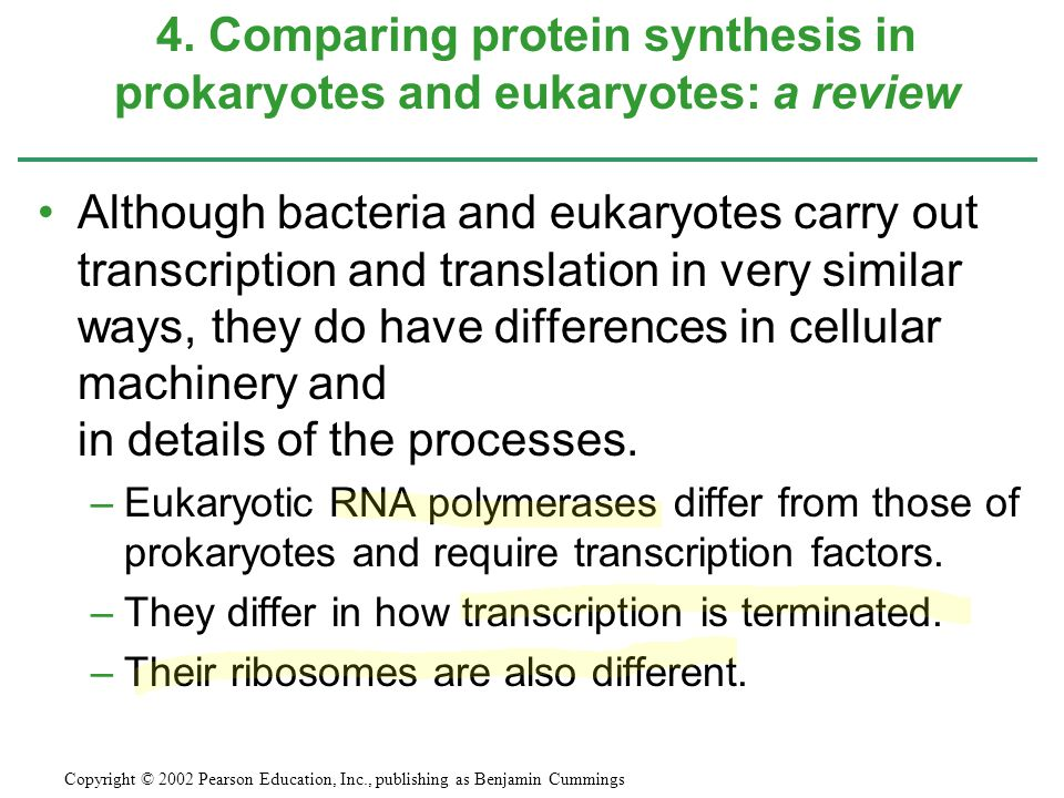 4. Comparing protein synthesis in prokaryotes and eukaryotes: a review