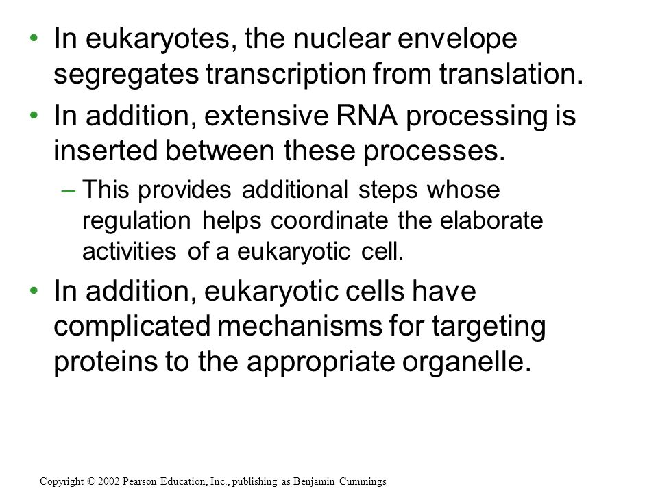 In eukaryotes, the nuclear envelope segregates transcription from translation.